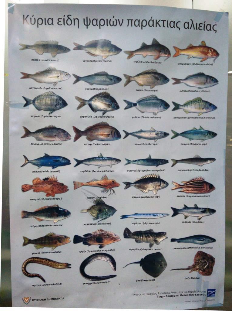 Кипр Природа Рыба